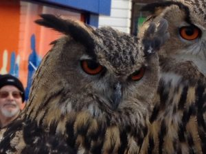 Owls from the threatened Folkestone owl rescue centre