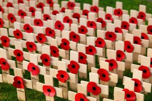Poppies on Remembrance Day