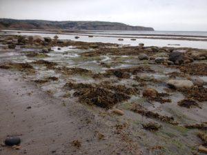 The shore. Tide edits the beach